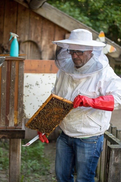 Méhész képzés indul